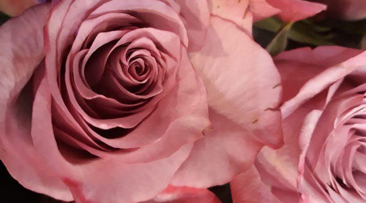 Λουλούδια Κουμπαρέλος Ηλέκτρα Τσαγκάλη