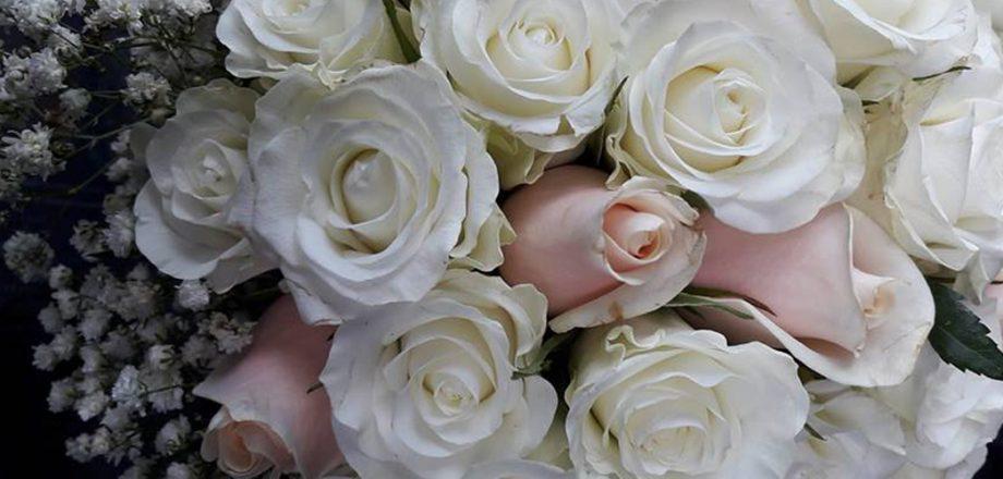 Zerbera Flowers