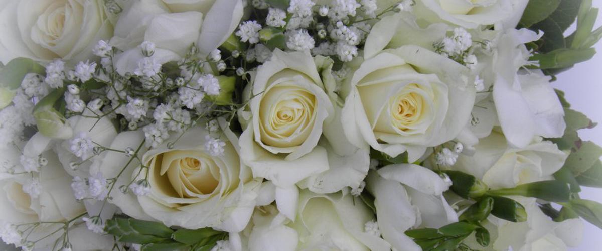 Cattleya FlowerStudio